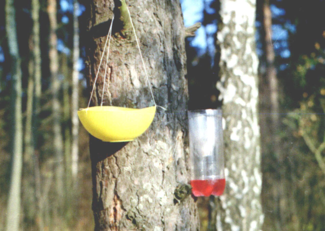 Как уничтожить осиное гнездо